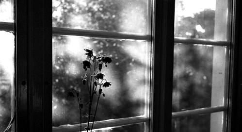 black,and,white,death,flower,window-ff05fa99b205dc728ad457665c4328c1_h